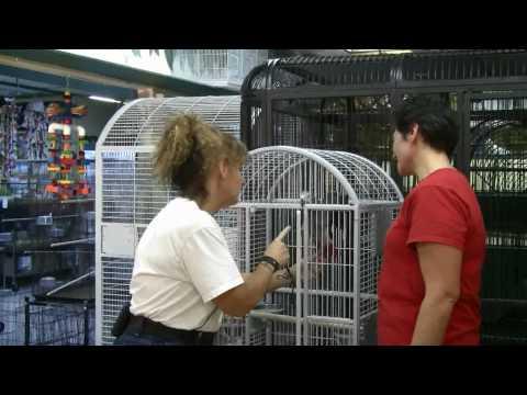 Cage World - Training African Grey Parrot Behavior Problem