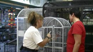 Cage World - Training African Grey Parrot Behavior Problem