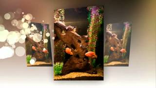 Freshwater Aquarium Designed By Aquatech Aquarium Services Los Angeles