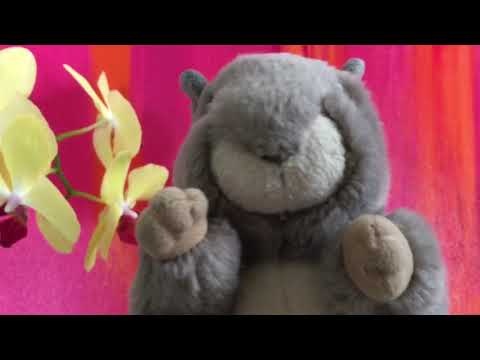 Could you be loved Bob Marley and The Wailers starring Squirrel and Little Teddy