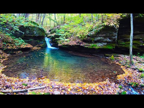 SECLUDED Miller Run Trout Slam (Pine Creek PA Trib.)