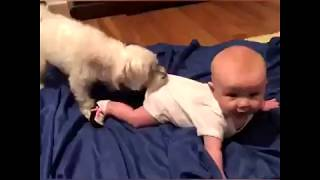 Funny Babies and Animals Fun Compilations 2018 - Fun and Only FUN