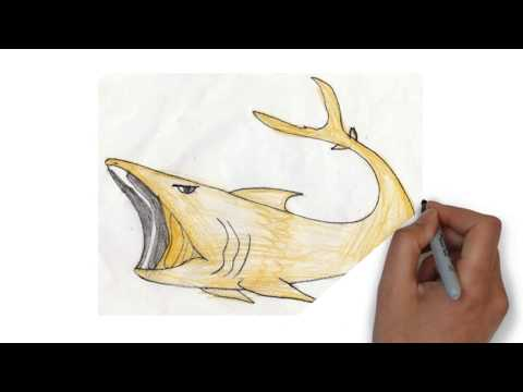 Simple drawing of Basking Shark