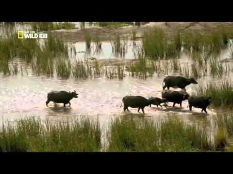 The Magical Island of Sri Lanka HD
