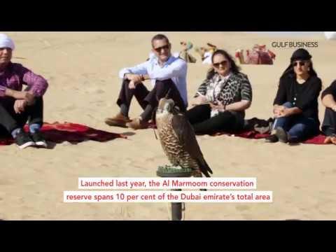 Dubai's next big tourist attraction, Al Marmoom Reserve, takes shape
