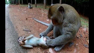 What daddy monkey do?, why daddy monkey do life this?