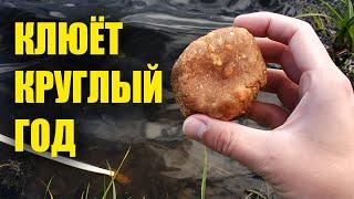 Осенью вся рыба клюёт на эту насадку лучше чем весной и летом