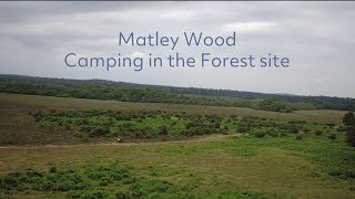 Mately Wood Camping in the Forest site