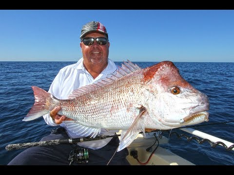 Double Island Point Snapper And AJ's | Fishing With Scotto
