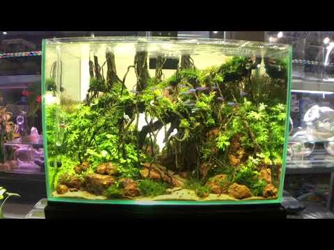 Juara Aquascape Indonesia Aquascape Ideas