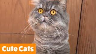 Cute Funny Cats | Funny Pet Videos