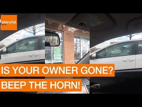 Impatient Dog Misses Her Owner; Beeps Car Horn (Storyful, Dogs)