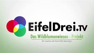Das Wildblumenwiesen - Projekt Teil 1