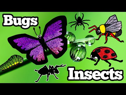 Learn Bug and Insect Names | How to Pronounce Bug Names in English