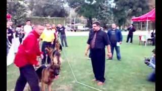 German Shepherd Show - Skopje 04.10.2009 [sony Starodzurdzevacki]