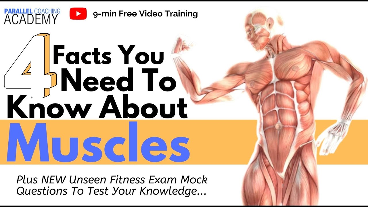 4 Facts you need to KNOW about Muscles to PASS your Level 2 Exam ...