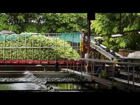 Bananen fabriek - Costa Rica