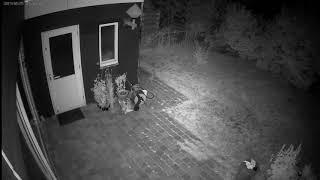 Vleermuizen-25-8-19 02-36 uur