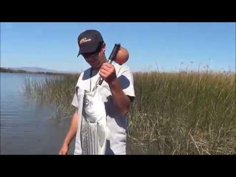 Montezuma slough striper limit 10 5 13 youtube for Montezuma slough fishing report