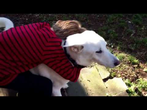 Boy and dog reunion surprise after a year apart.