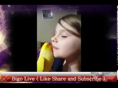 Bigo Live    Talking Parrort