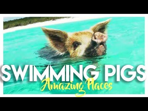 BAHAMAS: SWIMMING PIGS ISLAND IN EXUMA!