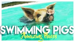 BAHAMAS: SWIMMING PIGS ISLAND IN EXUMA!