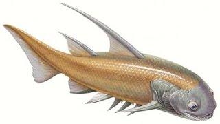 Надкласс Рыбы фильм 3.  Урок биологии.