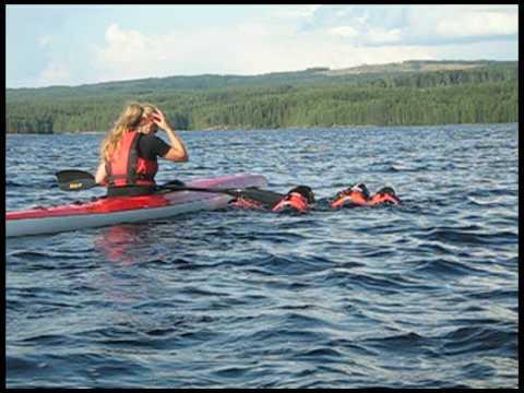 swimming sleddogs 2009