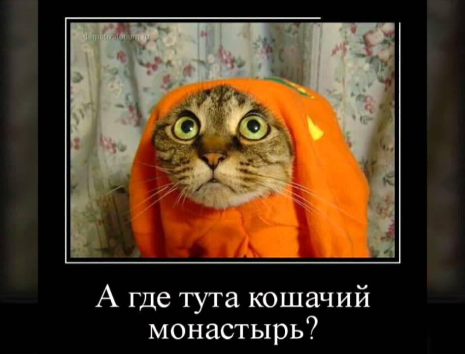 прикольные картинки котов с матом каталоге представлены