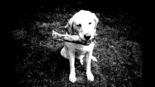 II II II - Dog's Lost His Bone