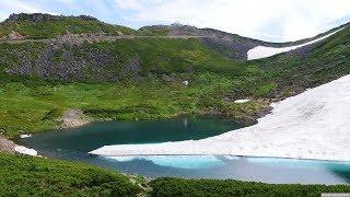 JG HDR 長野/岐阜 乗鞍山頂の花とライチョウの砂浴び(特別天然記念物) Nagano/Gifu,Mt.Norikura