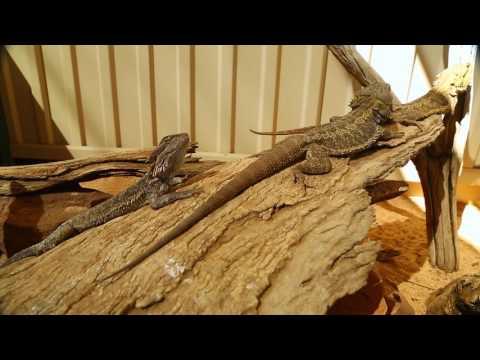 Working Holiday Visa in Australia – Alice Springs, Northern Territory