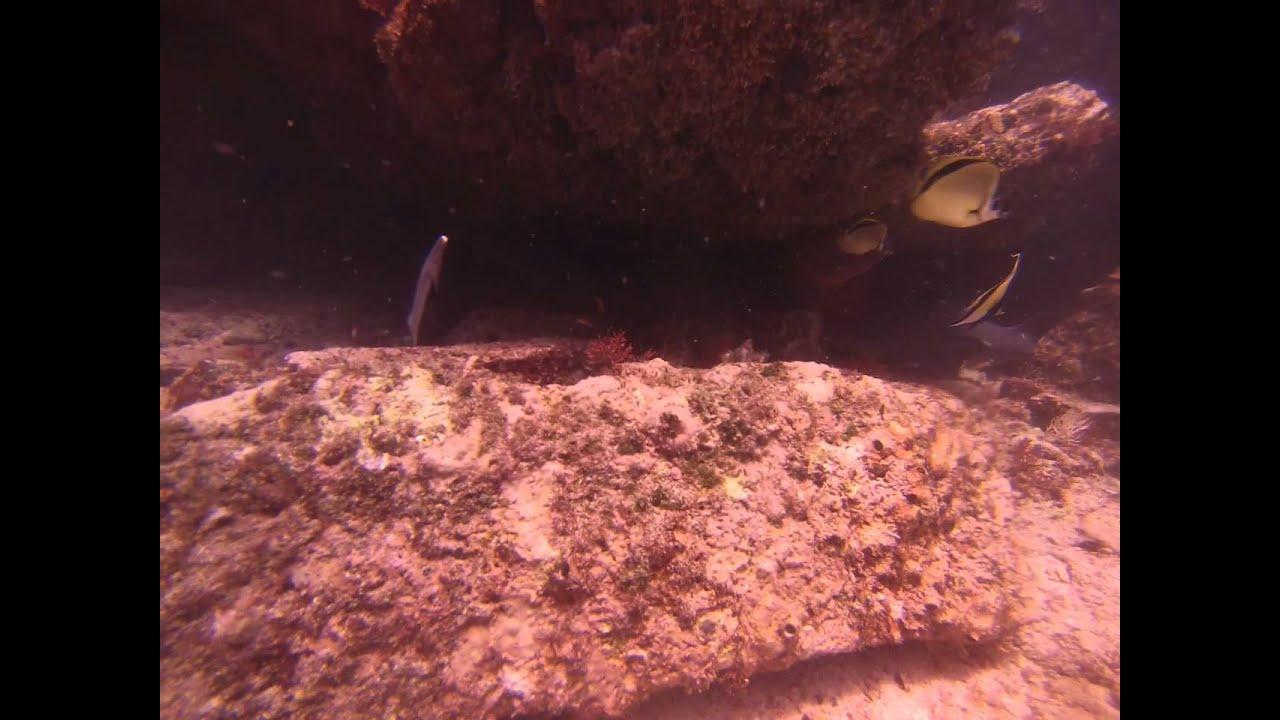 pinocchio shark youtube
