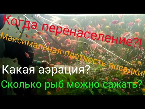 Сколько рыб в аквариум можно посадить?Перенаселение?