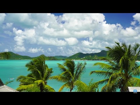 4K UHD Nature Screensaver: Caribbean Palm Vista 1HR Static Nature Relaxation™video A7RII Antigua