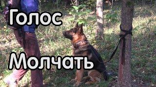 Команда голос, как теперь научить собаку молчать?
