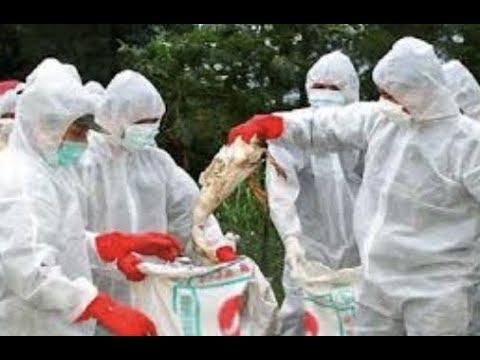 """BREAKING: """"Holistic Doctor Reveals Dangerous Components In Flu Vaccine"""""""