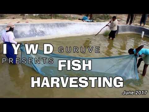 IYWD Organic Fish Farming (Guruve,Zimbabwe)2