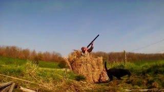 ducks Hunting - chasse de canard 2016