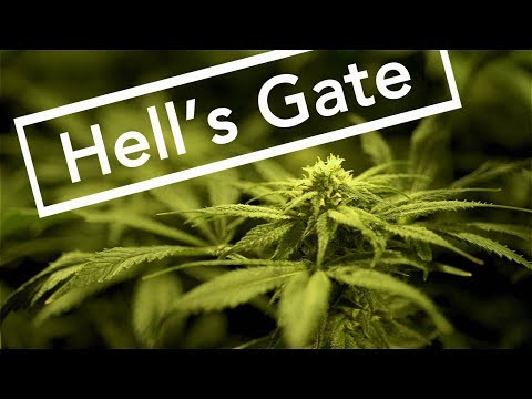 DARK WATERS OF CRIME: Hell's Gate - When Cannabis Kills - FULL EPISODE