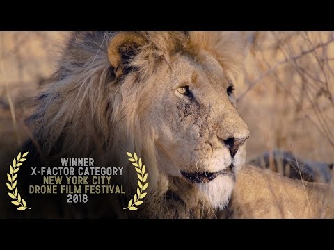Kingdom of the Wild - 2018 New York City Drone Film Festival X-FACTOR Category Winner