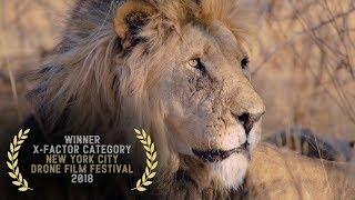 Kingdom of the Wild - 2018 New York City Drone Film Festival X-FACTOR Category Winner