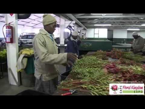 Cape Floral Kingdom Expo 2013