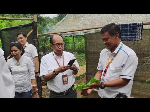 Panen Caisim Hasil Uji Aplikasi BioALA - VLOG #05
