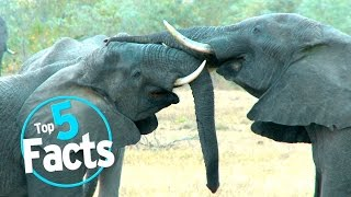 Top 5 Hard-Hitting Zoo Facts