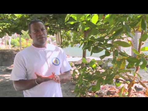 Partnerships for Resilience: Caribbean Fish Sanctuaries