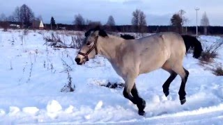 Лошадь с собакой бегают наперегонки.