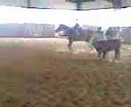 NCHA CUTTING HORSE OZARK ROC W/ 4YR OLD RIDING
