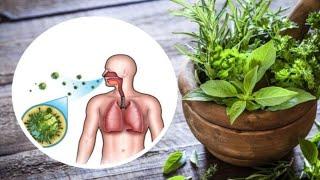 plante pt detoxifierea plamanilor